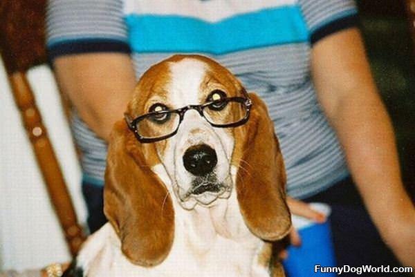 Im A Smart Dog