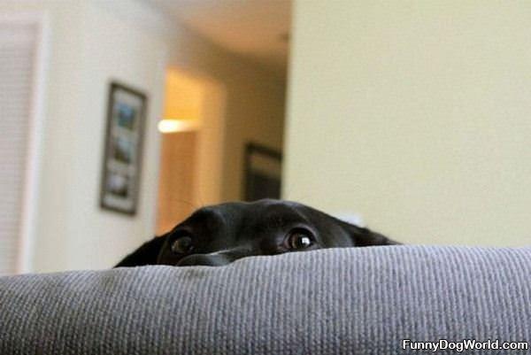 Im Hiding