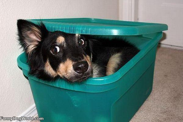 Im In A Box