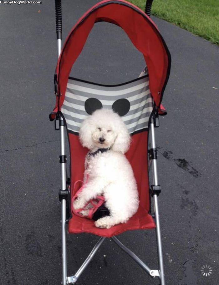 In My Stroller