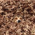 In The Leaves