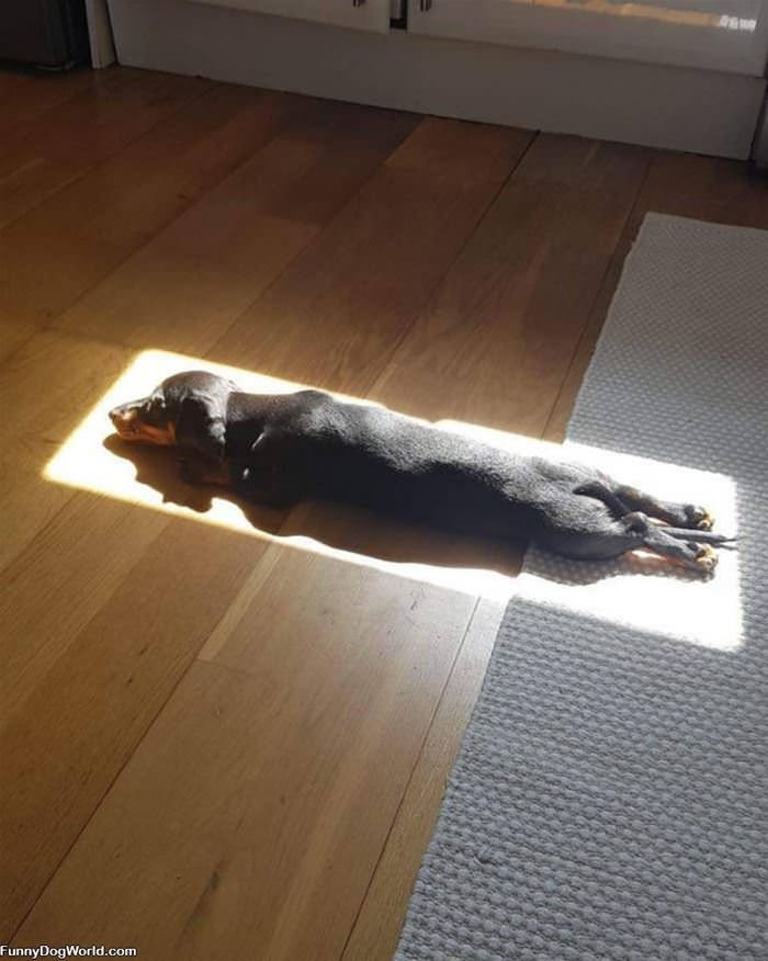 In The Sun Rays