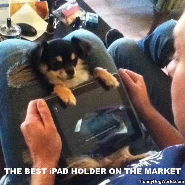 Ipad Holding Dog