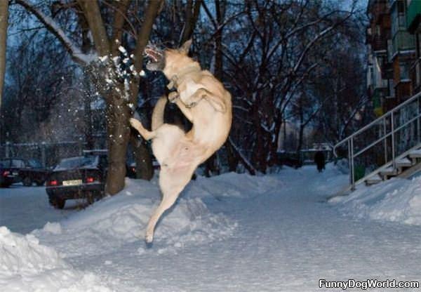Jumper Dog