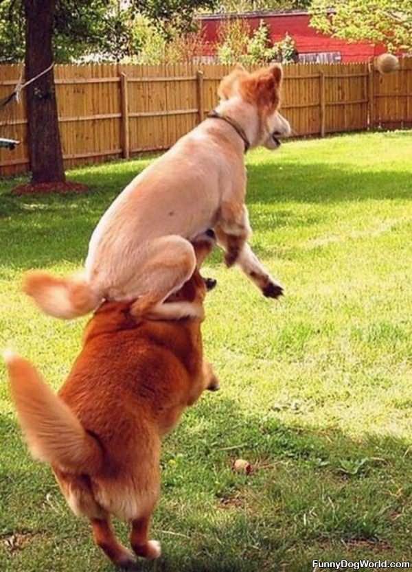 Jumper Dogs