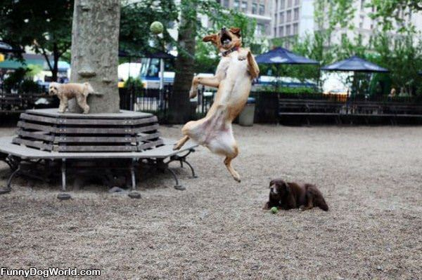Jumping To Get It