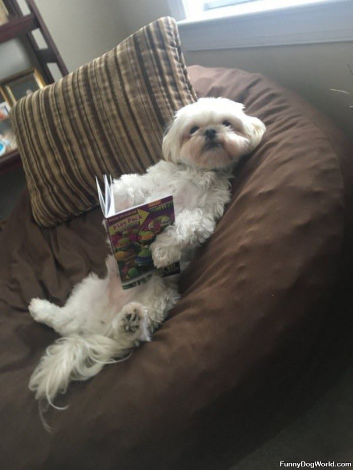 Just Reading A Little Book