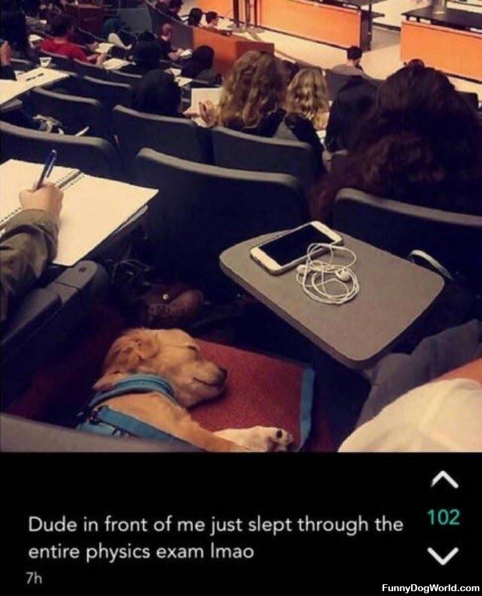 Just Sleeping Through The Entire Exam