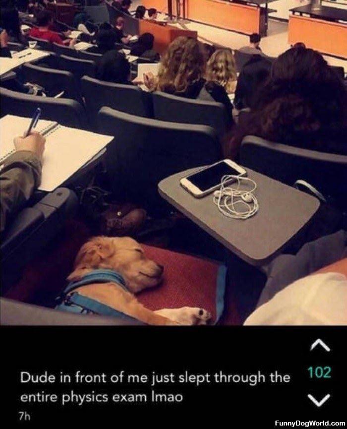 Just Sleeping Through The Entire Exam