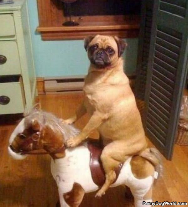 Just Taking A Horse Ride