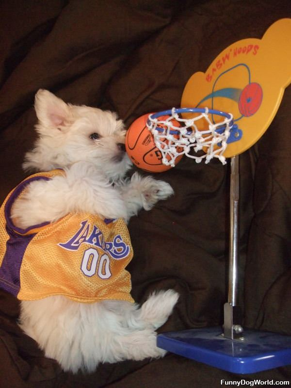 Lakers Fan