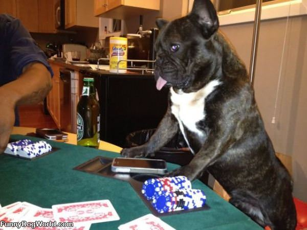 Lets Play Some Poker