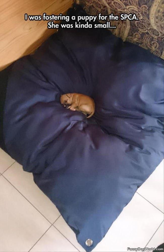Little Dog Big Bed