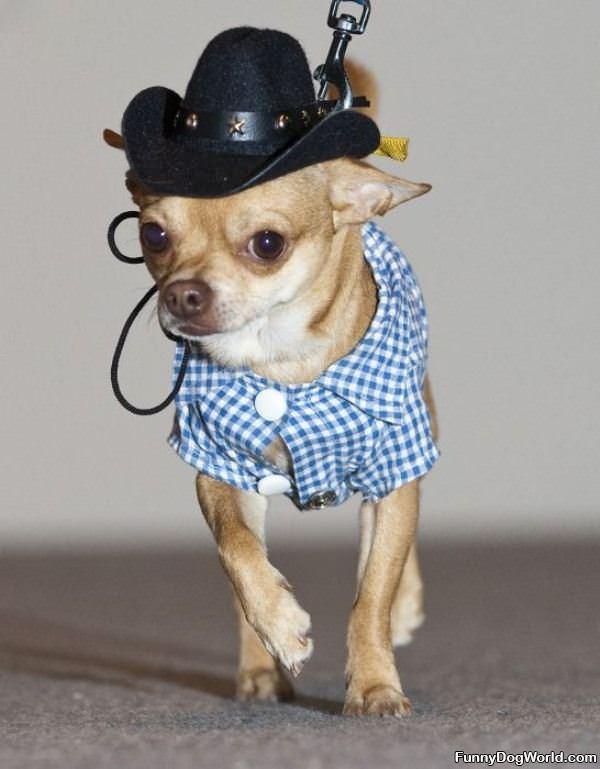 Little Hat Dog