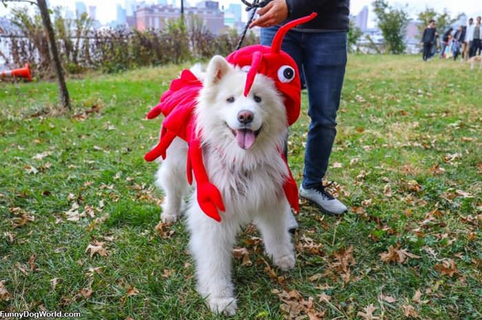 Lobster Dog Is Out