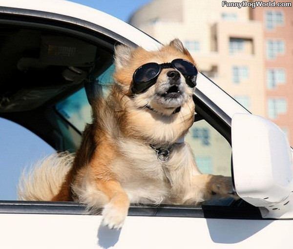 Love My Car Rides