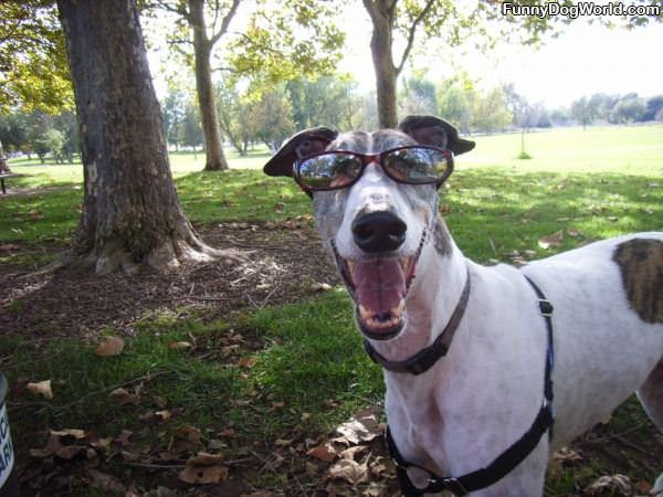 Loves The Sunglasses