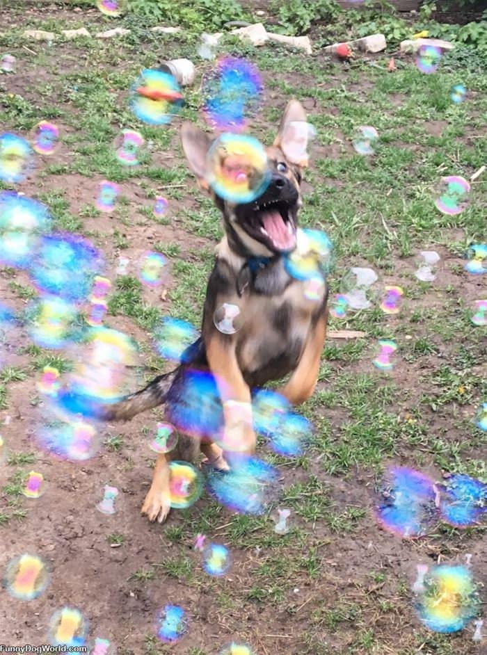 Loving Bubbbbbbles