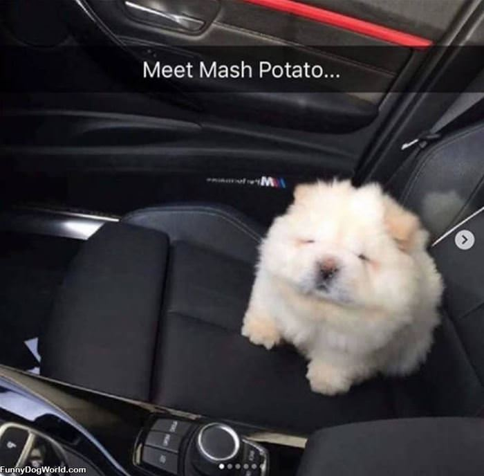 Mashed Potato