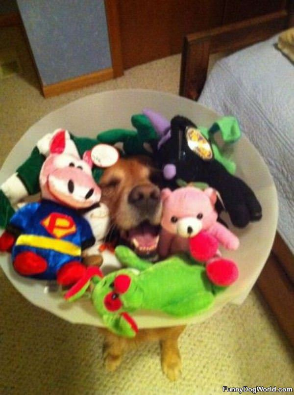 Me And My Toys
