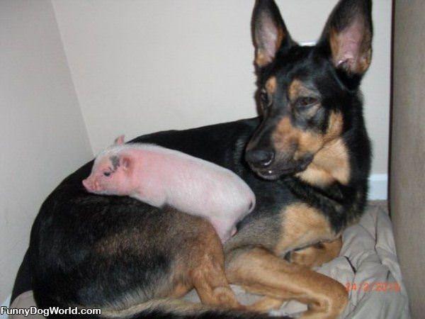Me And Piggy