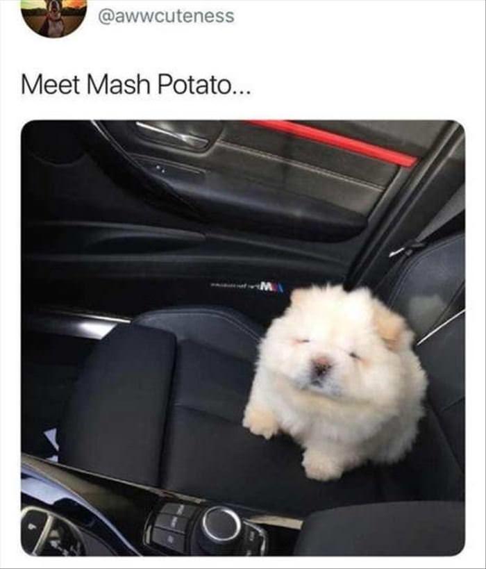 Meet Mashed Potato
