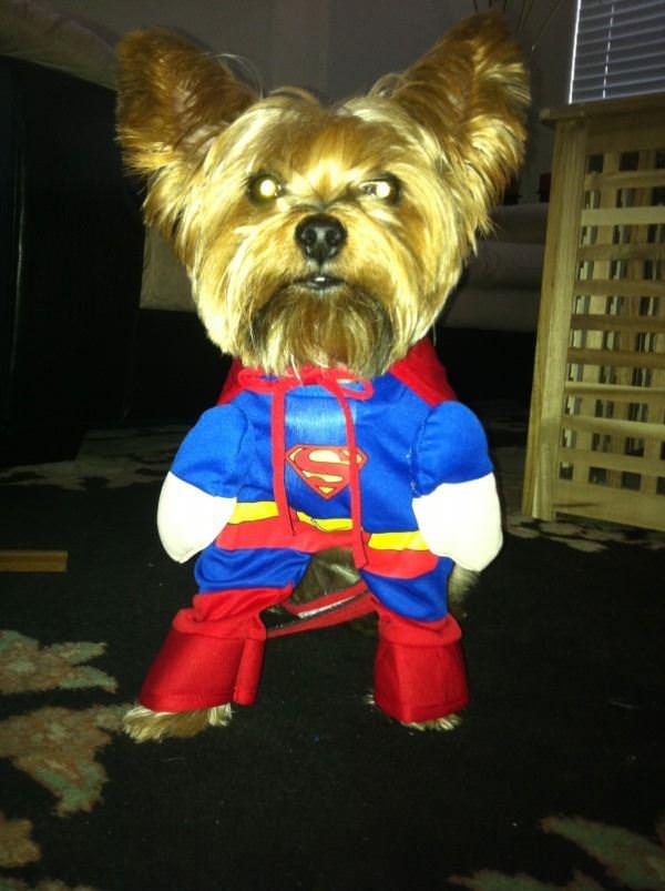 Miko Superman I
