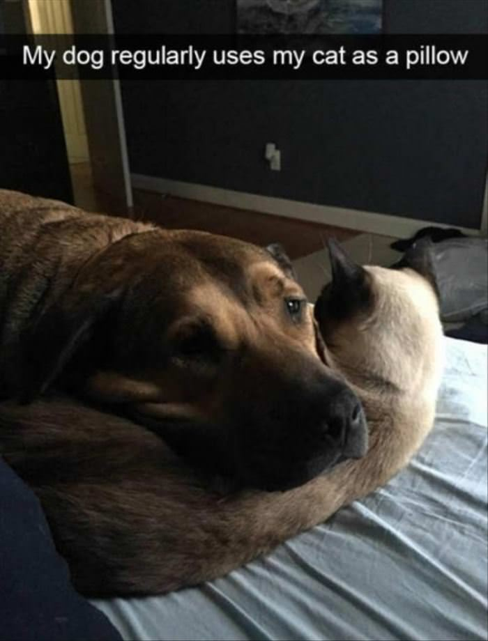 My Dog Uses My Cat As A Pillow