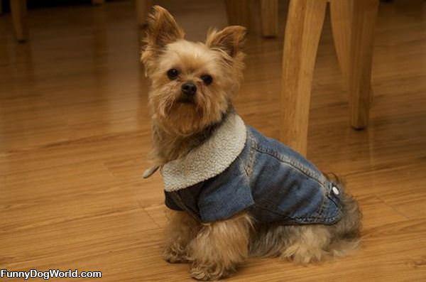 My Jean Jacket