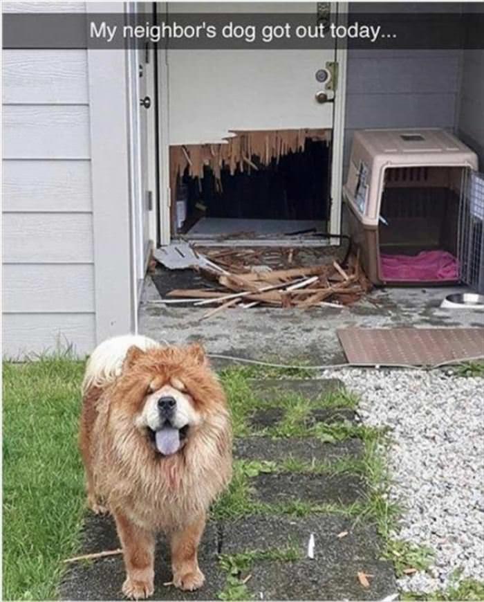 My Neighbors Dog