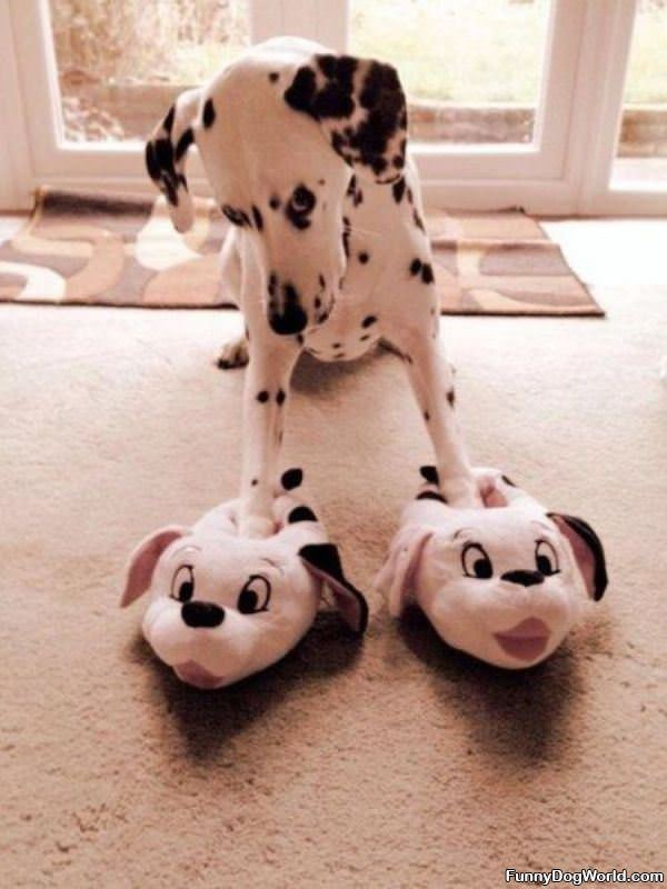 My New Slippers