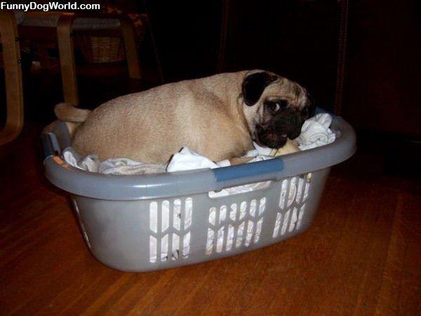 My Sleeping Basket
