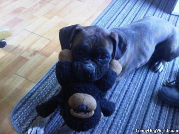 My Stuffed Animal