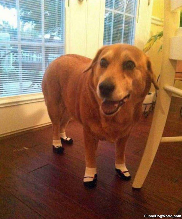 New Fancy Shoes