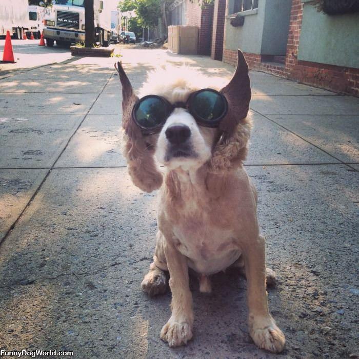 Nice Glasses Dude