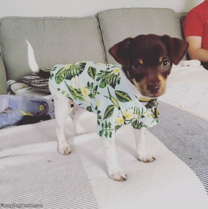 Nice Puppy Shirt