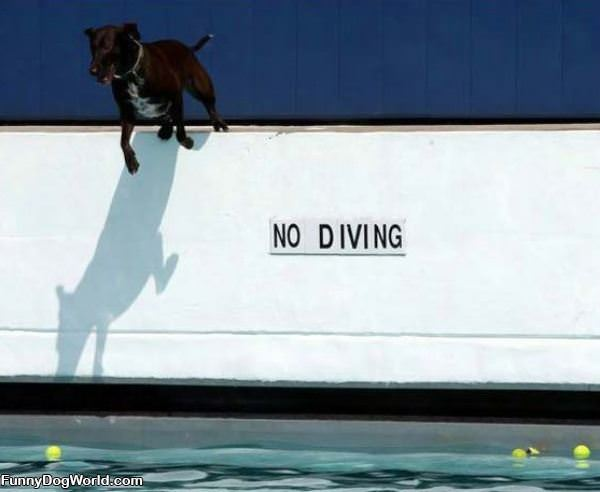 No Diving Dog