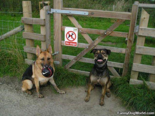 No Dogs Haha