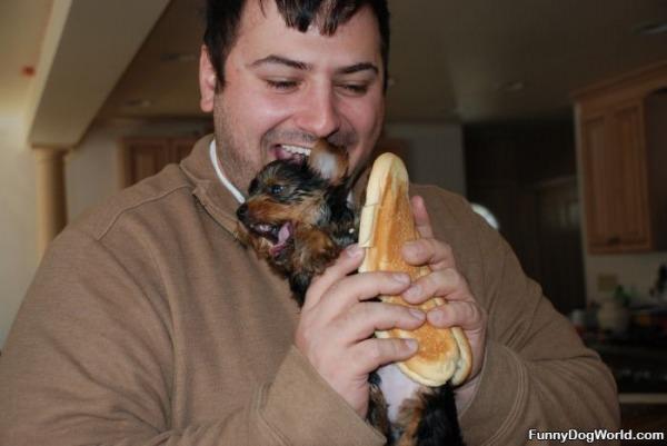 Nom Nom Nom Hotdog