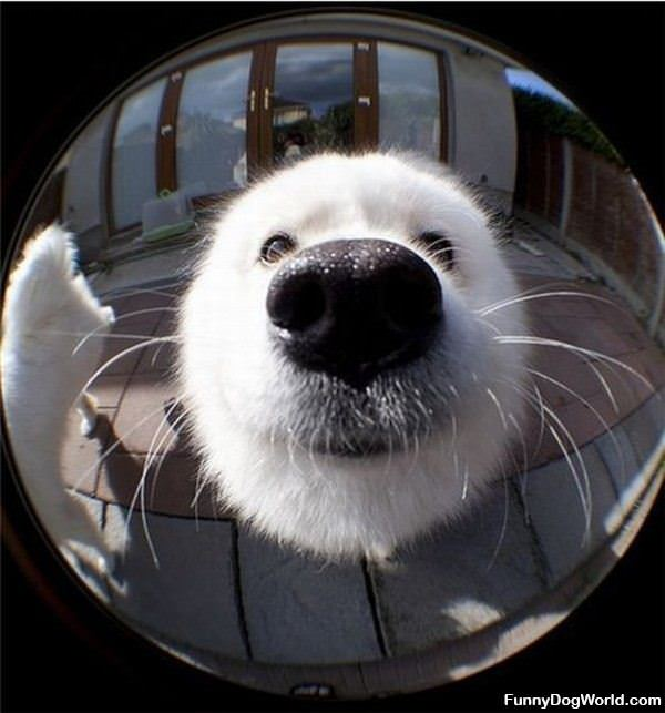 Nose Closeup