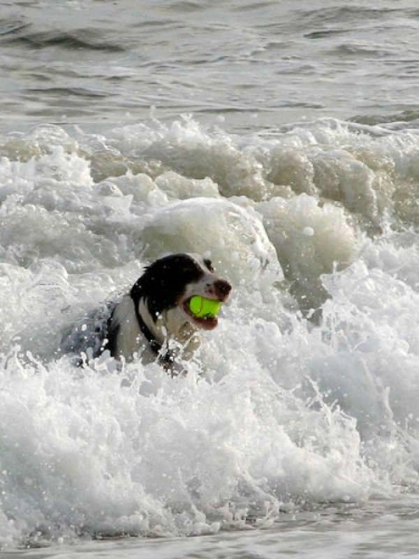Ocean Fetch