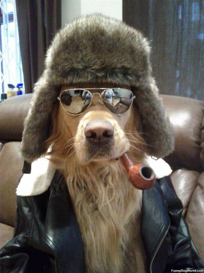Oh Yeaaa Cool Dog