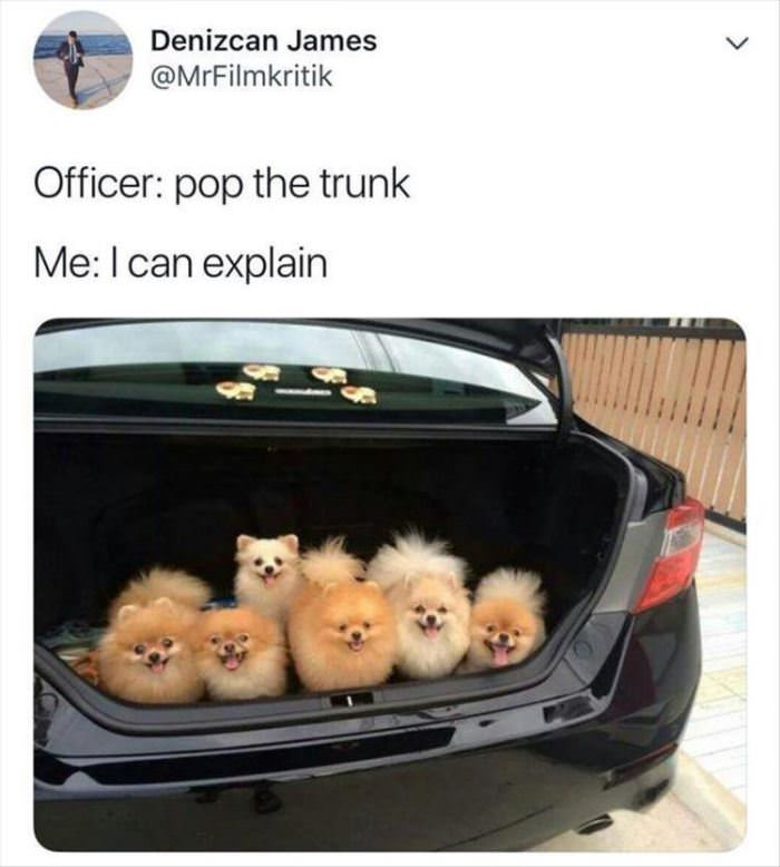 Opened The Trunk