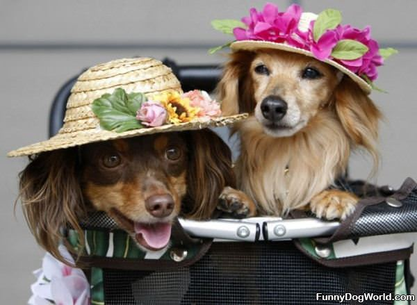 Our Fancy Hats