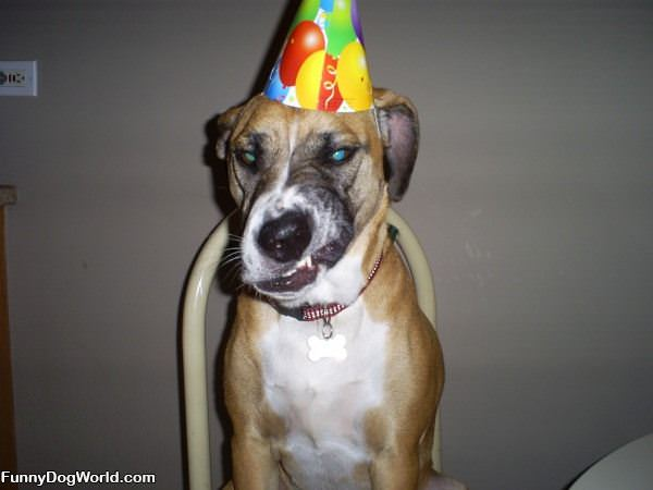 Party Dog Hates Party Hats