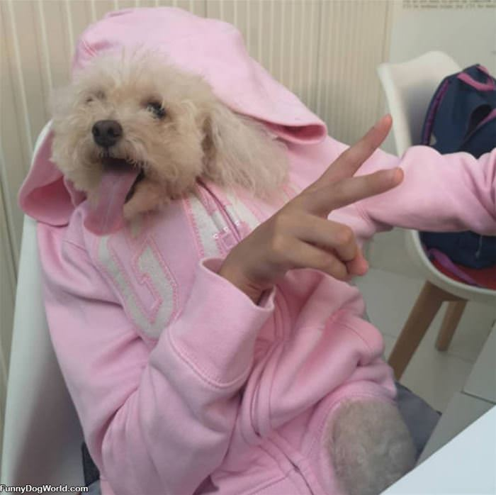 Peace Out Dogs