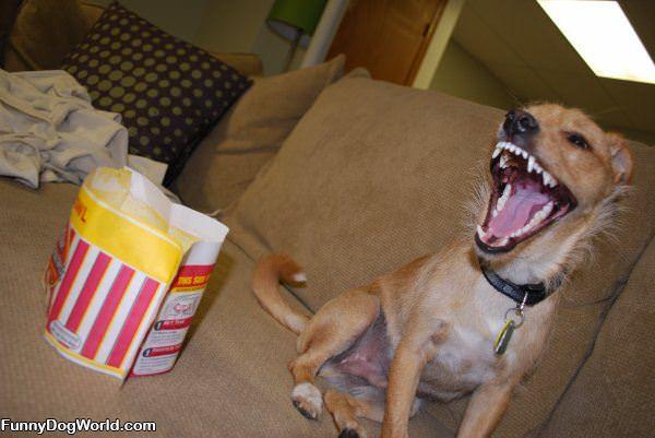 Peanut The Dog