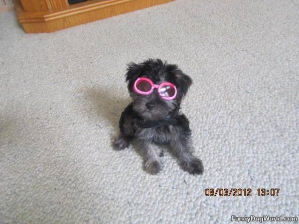 Pepper In Sunglasses