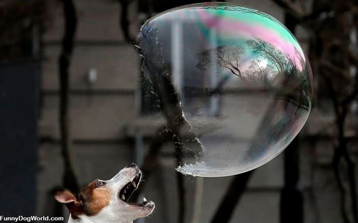 Popped The Bubble