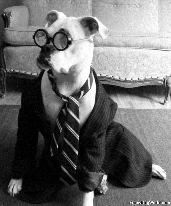 Professor Dog